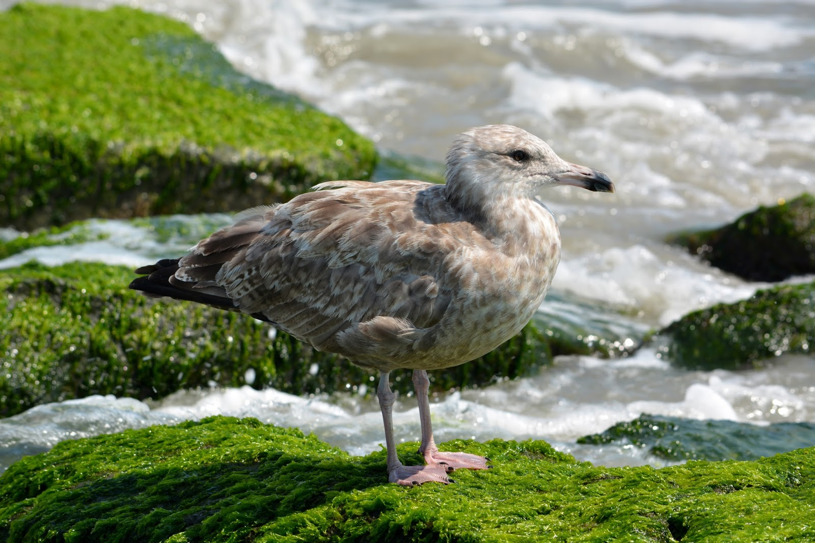 cozy birdhouse | seagull, on the rocks (not a drink)