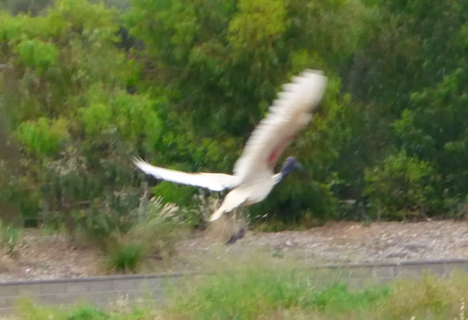 Bird Diary blog