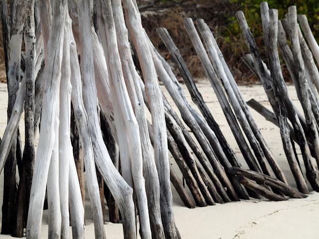 #Mnemba Driftwood, Tanzania