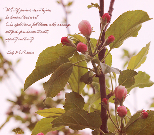 Apple Blossom Motivational Quote Photo Art by Tori Beveridge