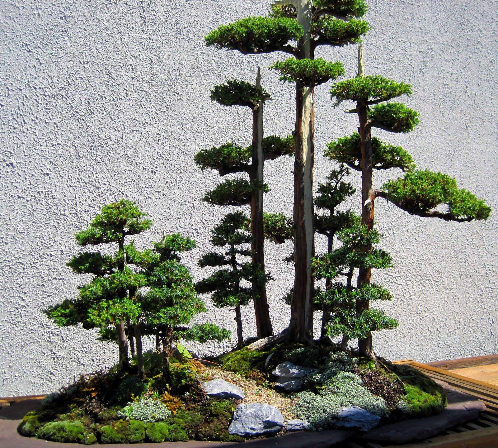 The Nature Of Things Bonsai And Espalier