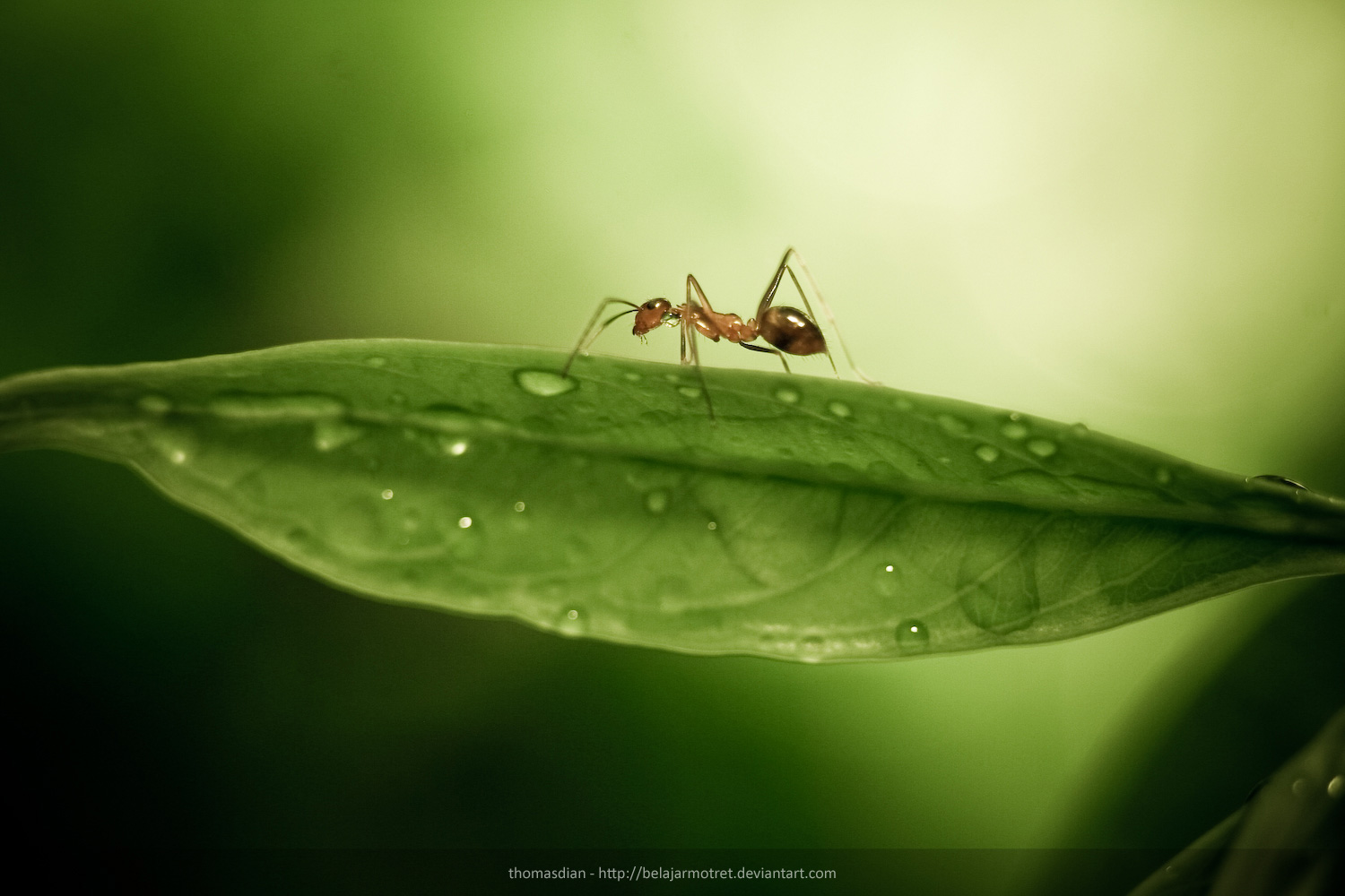 Ant Wallpaper