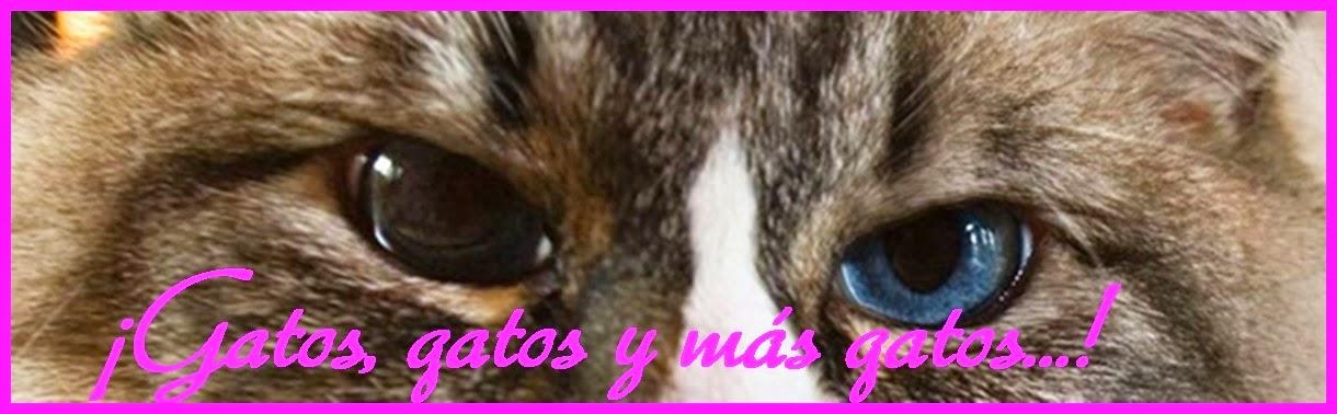 Gatos, Gatos Y Mas Gatos...