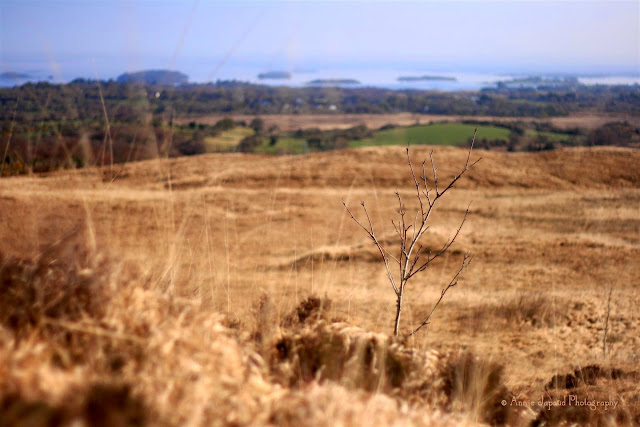 view towards Lough Corrib from the Connemara hills