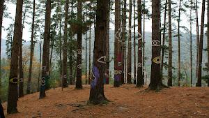Imágenes del Bosque de Oma