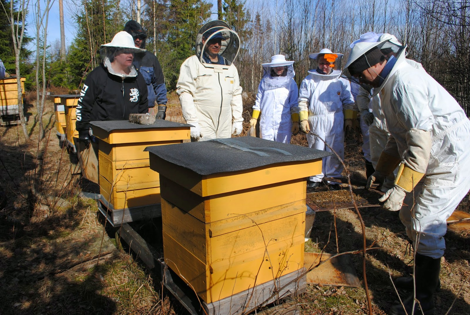 mehiläisten hoito kurssi Saarijarvi