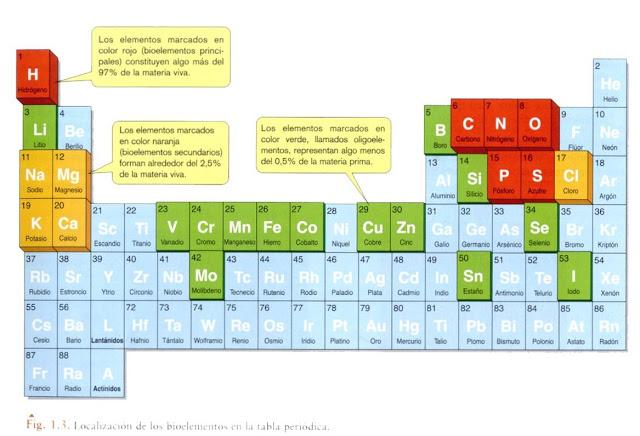 Bioelementos y biomolculas biologa contemporanea de todos los elementos de la tabla peridica aproximadamente 25 son esenciales para los organismos y son conocidos como bioelementos urtaz Gallery