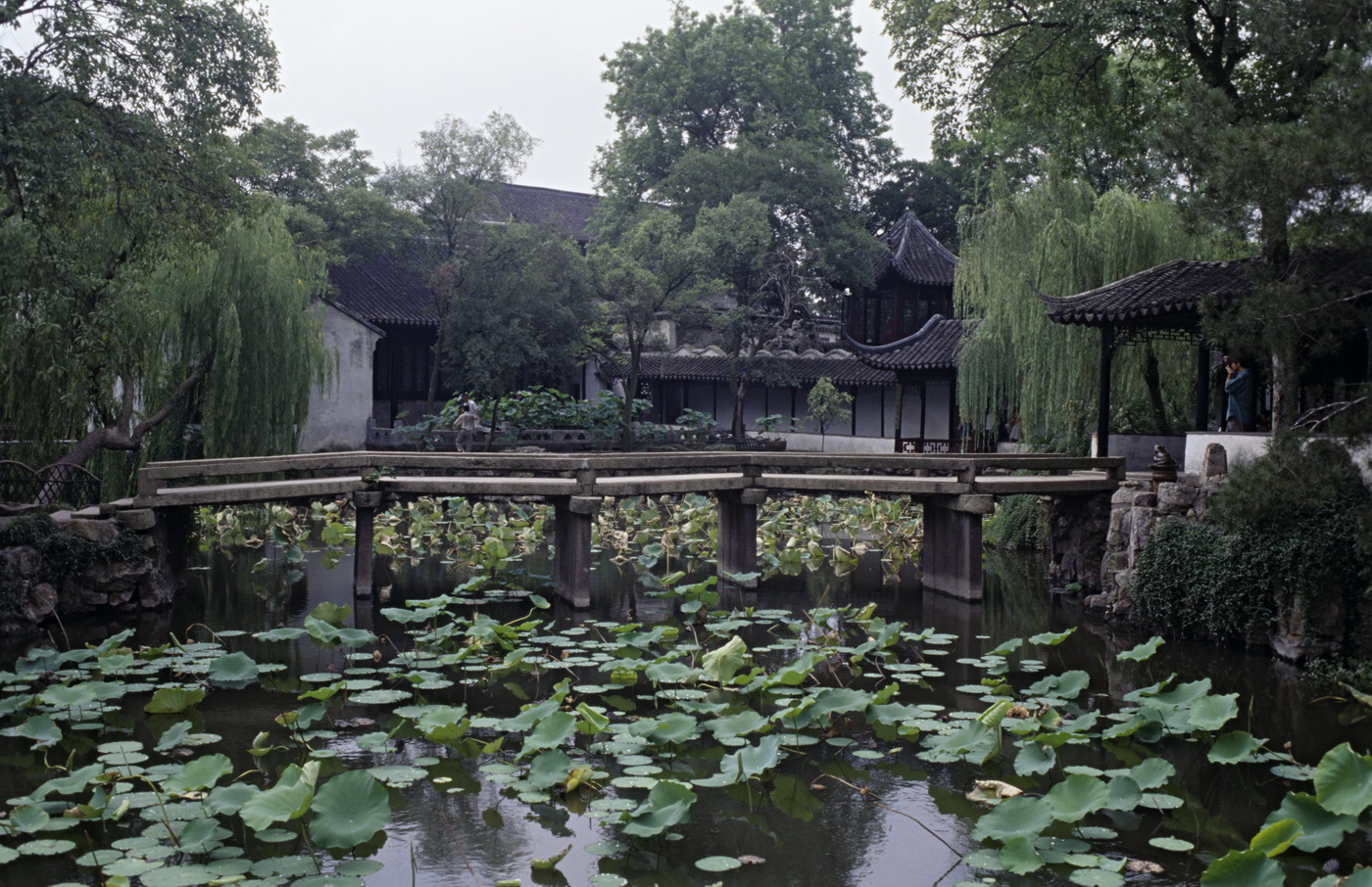 Jardines for Jardin chino