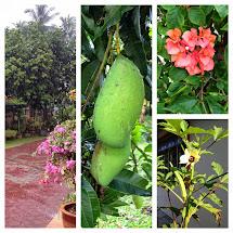 My Garden / Taman Saya