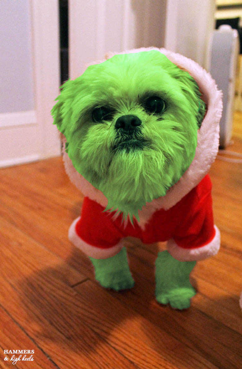 Green fur is courtesy of Photoshop; I would NEVER dye our pups hair