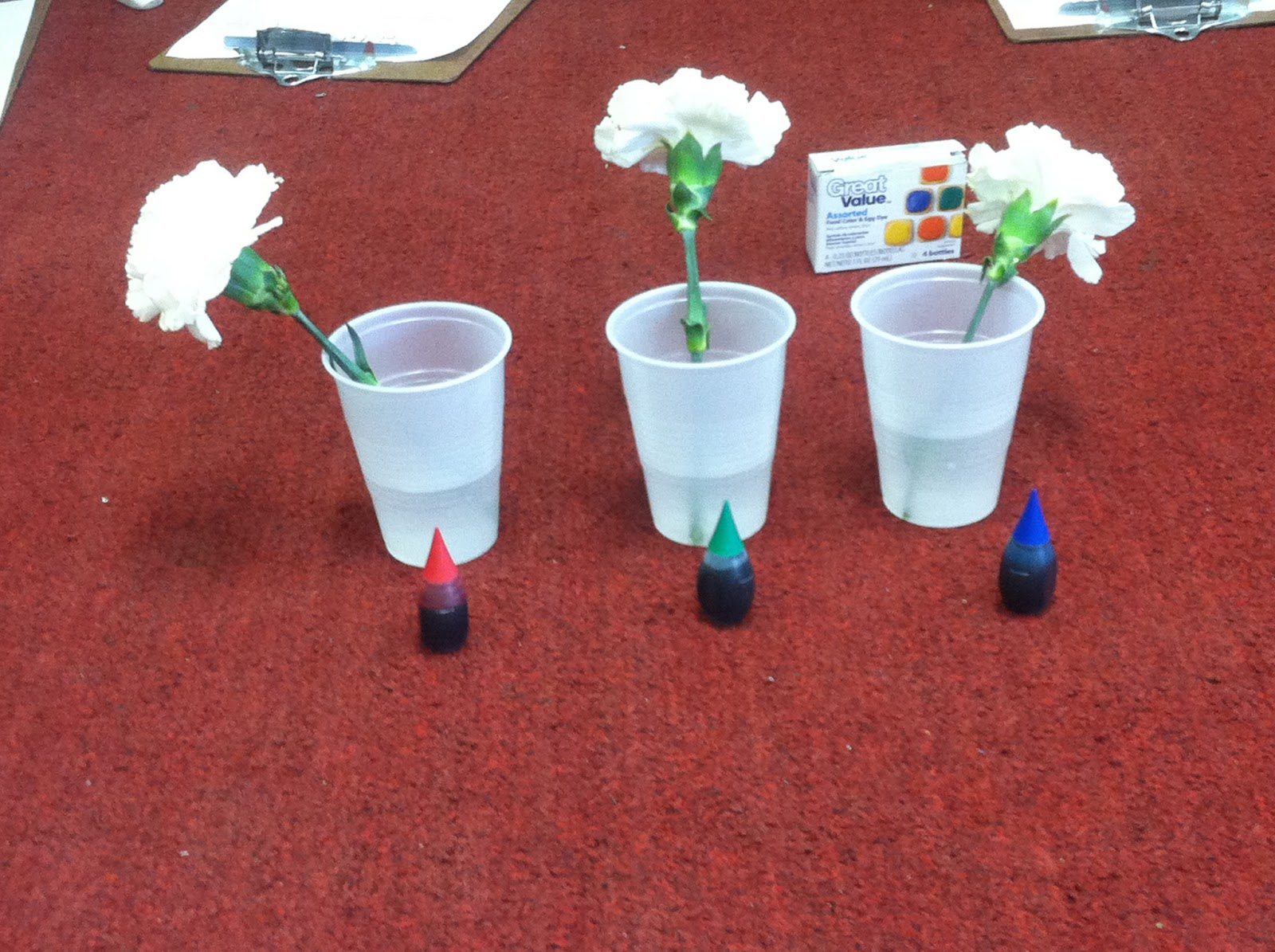 Mrs. Assell\'s Kindergarten!: Sci-Fri Color Changing Flowers