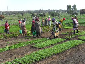 Moçambique: AGRICULTORES NÃO APROVEITAM LINHA DE CRÉDITO BANCÁRIA