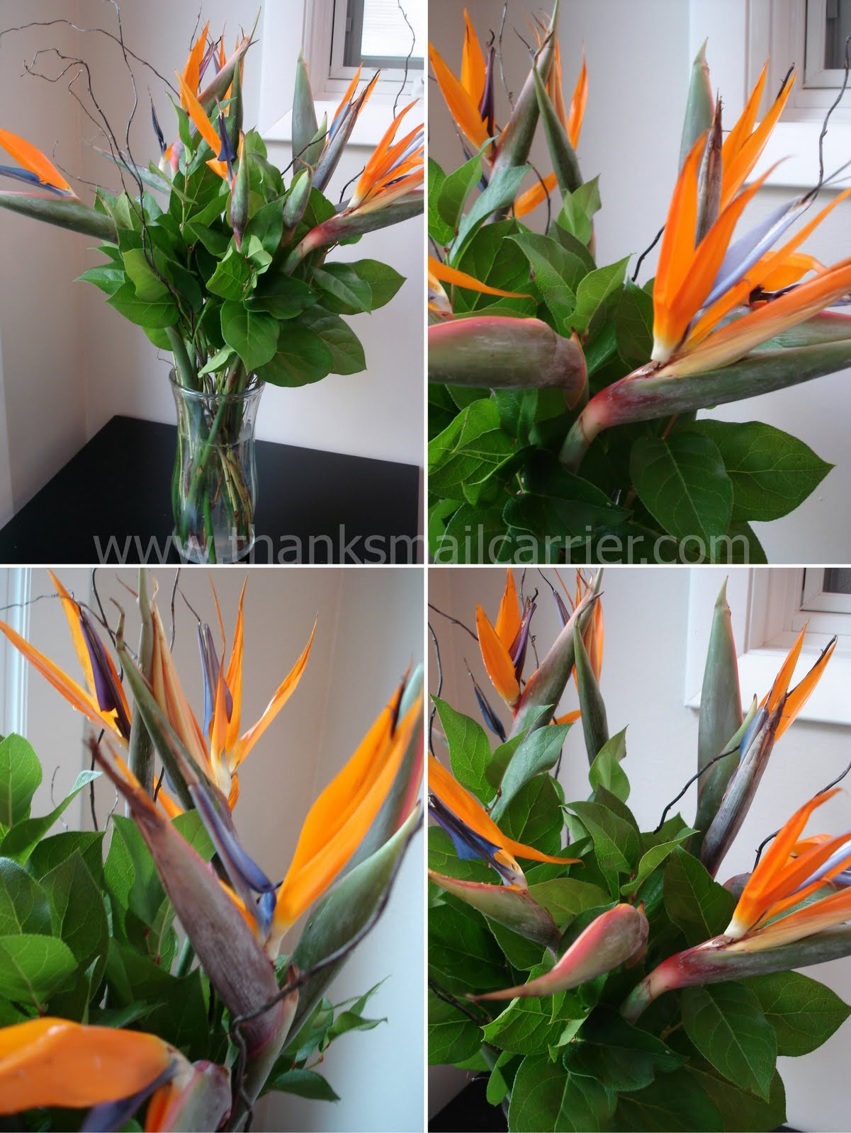 Thanks, Mail Carrier | Avas Flowers {Birds of Paradise Bouquet ...
