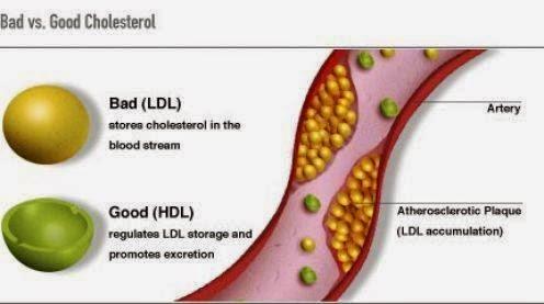 tỏi đen với việc giảm cholesterol