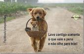Vida simples de cão