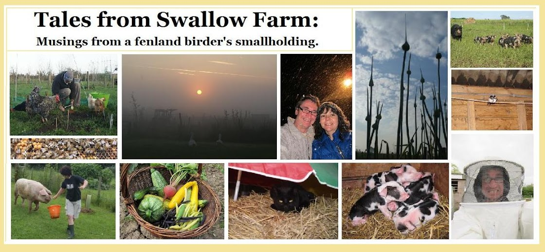Tales from Swallow Farm