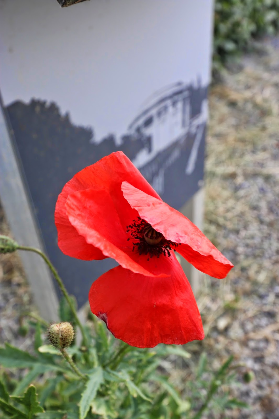 Let Us Add To The Peace And Give Thanks As We Remember World War 1