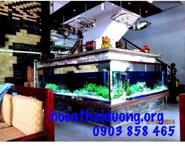 http://www.hocathaiduong.org/2015/03/cach-at-be-ca-kieng-thu-hut-tien-tai.html