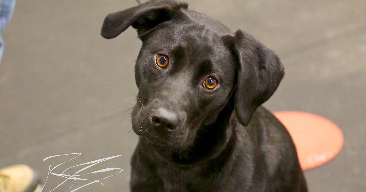 Reward Based Dog Training Wi