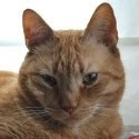 This is Calle-Cat, with Hobbes, one of the founders of The Red Cat Society