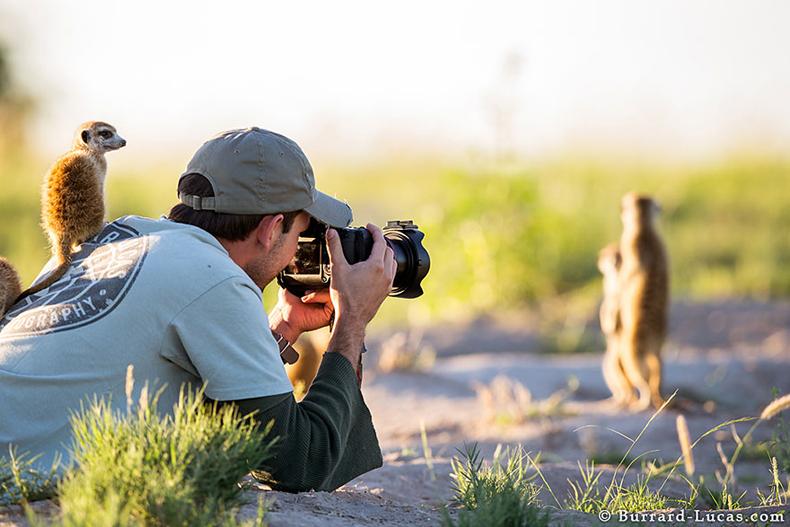 Fotógrafo se convirtió en un práctico puesto de observación para los lindos suricatas