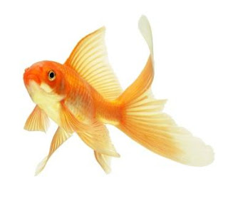 Goldfishes and Memory