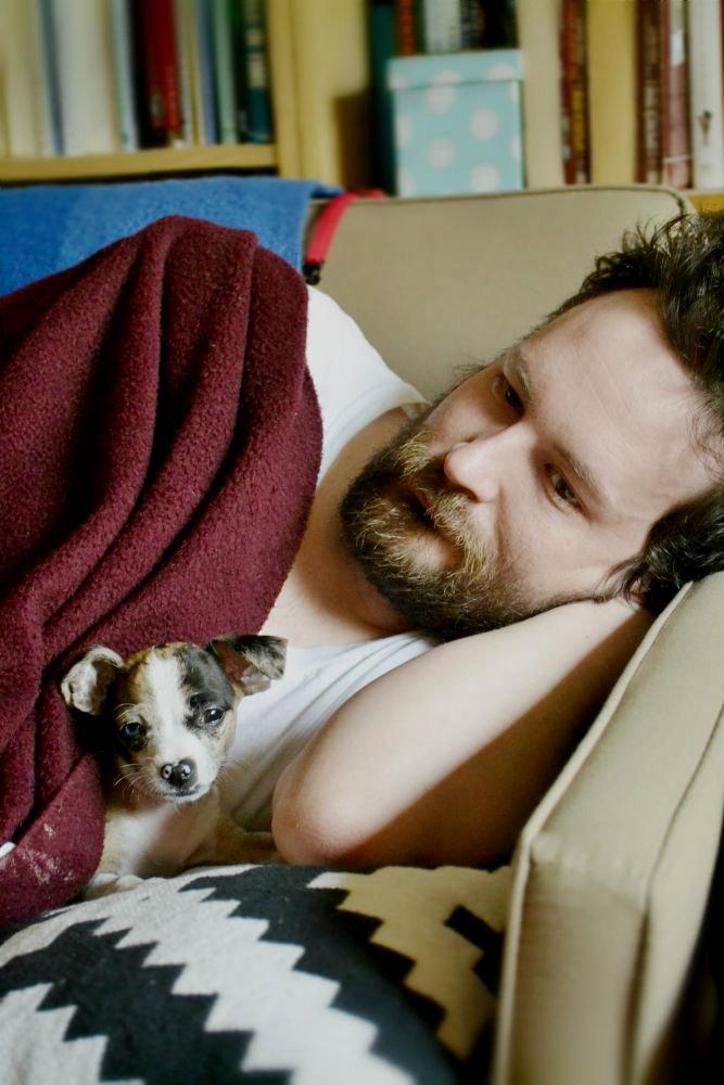 chihuahua, puppy, merle, beard, seattle, lifestyle