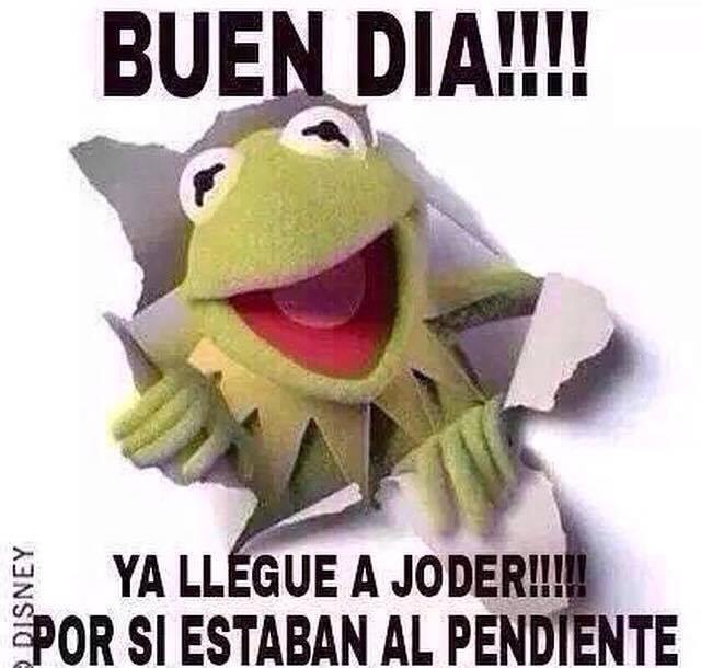 10624677_715379531880223_3816967036923772751_n memes de la rana rene memes de la rana rene buen día