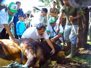 Ahmad Heryawan sembelih hewan qurban (foto Javanews)