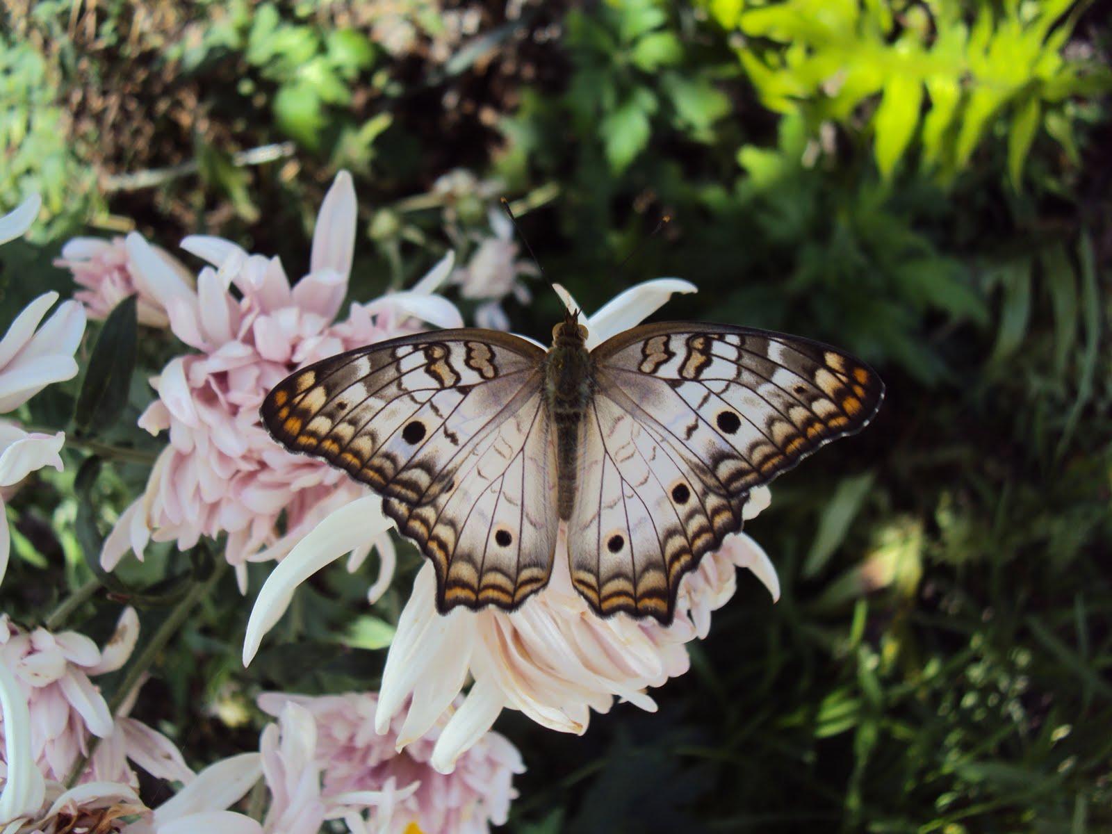 O néctar que me alimenta...