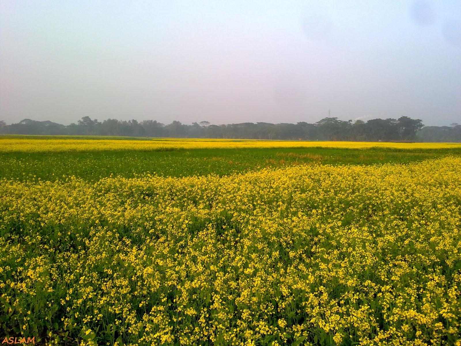 Amazing yellow flower
