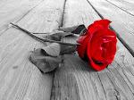 Read Rose ;)