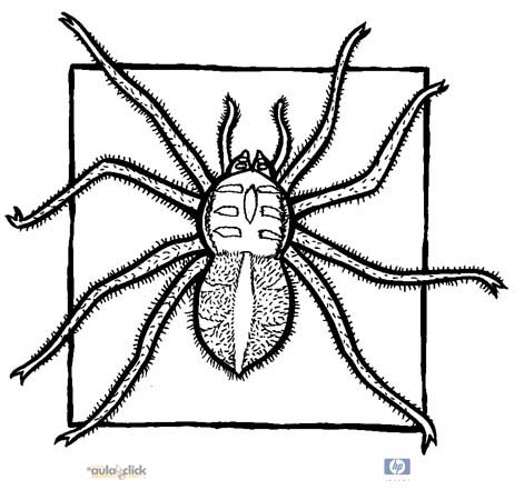 Animales e invertebrados para pintar - Imagui