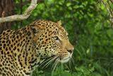 Krugerpark-avonturen - We zien 10-tallen roodbekbufferwevers bezig met het bouwen van nesten. Krugeravonturen - kamp Satara -