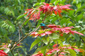 spot the sunbird!