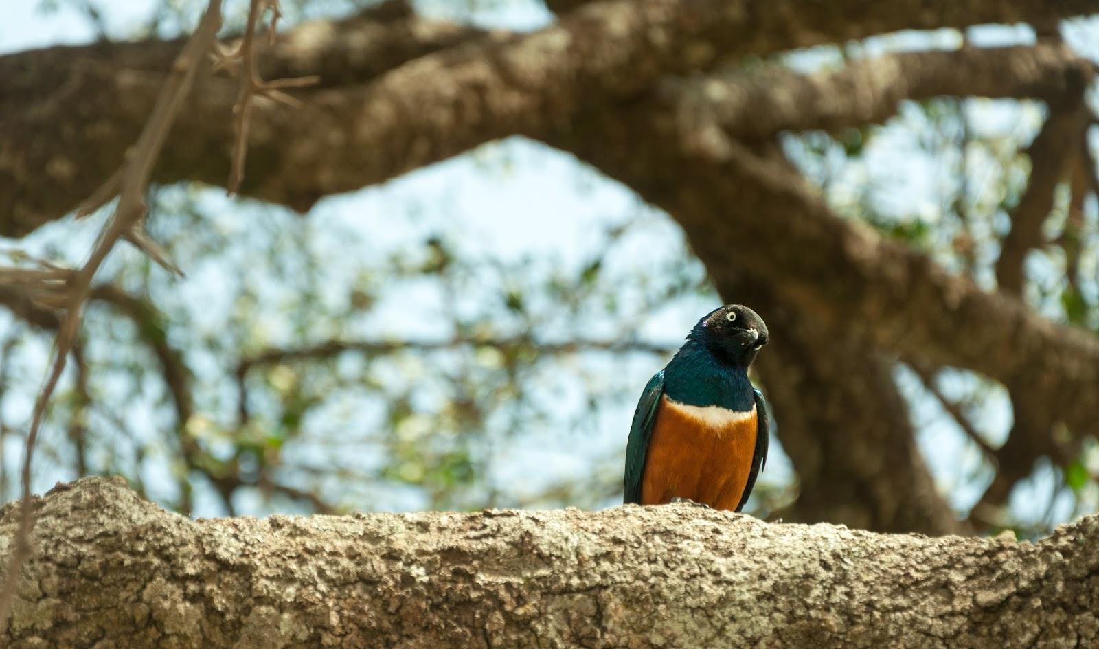 Serengeti Hikayeleri #2