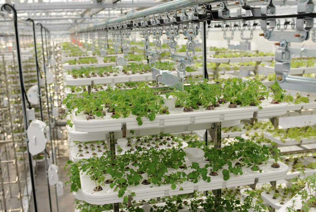 la cara oculta de los cultivos verticales ecosiglos