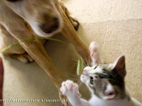 子猫とラブ