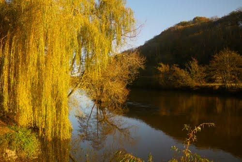 Autumn Willow3