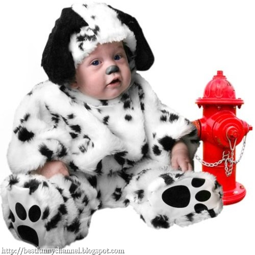 Funny baby dressed  dalmatian.