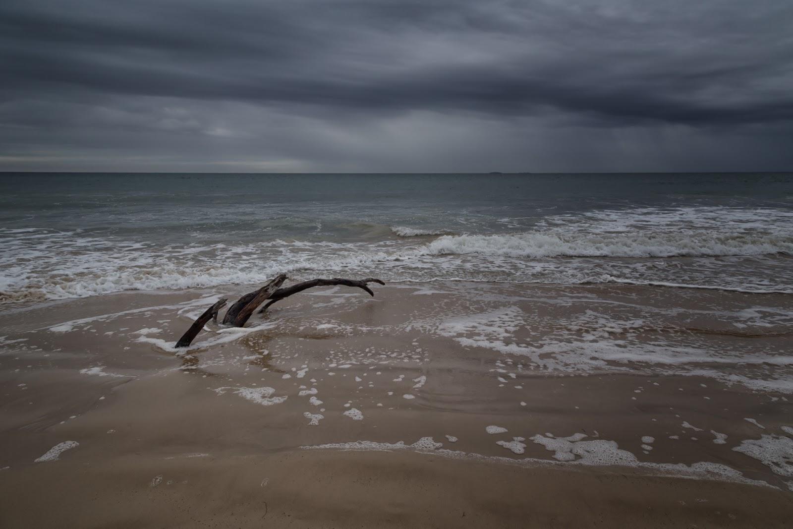tree in water three mile beach wilsons promontory