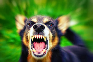 http://www.personalinjurydefenders.com/dog-bites.html