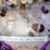 Majlis Al Qiqah Baby Hanna Tatiana