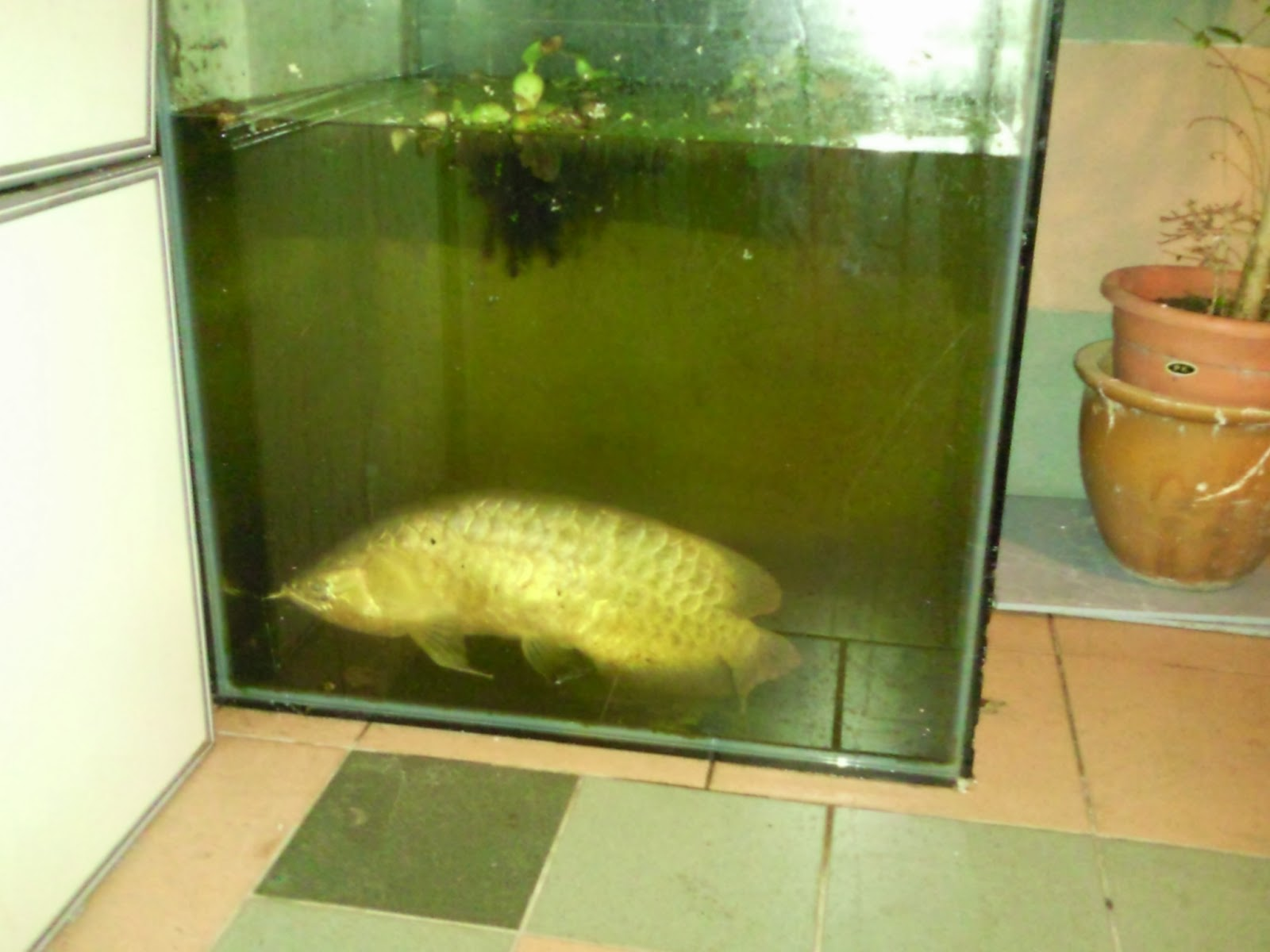 3ft aquarium for sale 3ft fish tank for sale boston for Fish tank with fish
