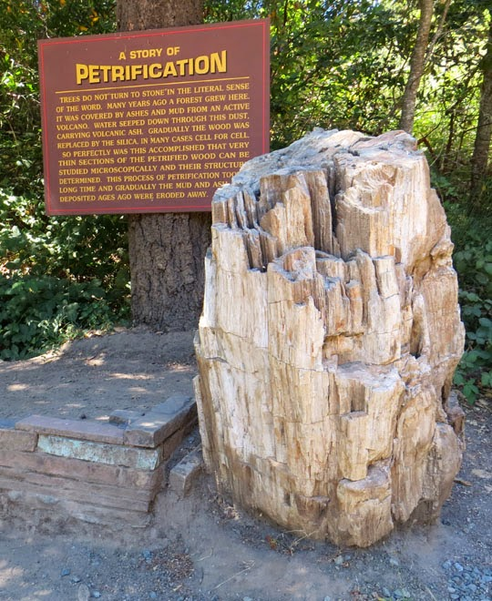 The intrepid tourist petrified forest three million year old petrified forest three million year old redwoods turned to stone calistoga california sciox Choice Image