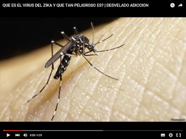VIDEO: QUE ES EL VIRUS DEL ZIKA Y QUE TAN PELIGROSO ES?