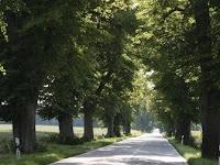 hileras de árboles