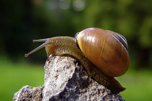 Fried snail