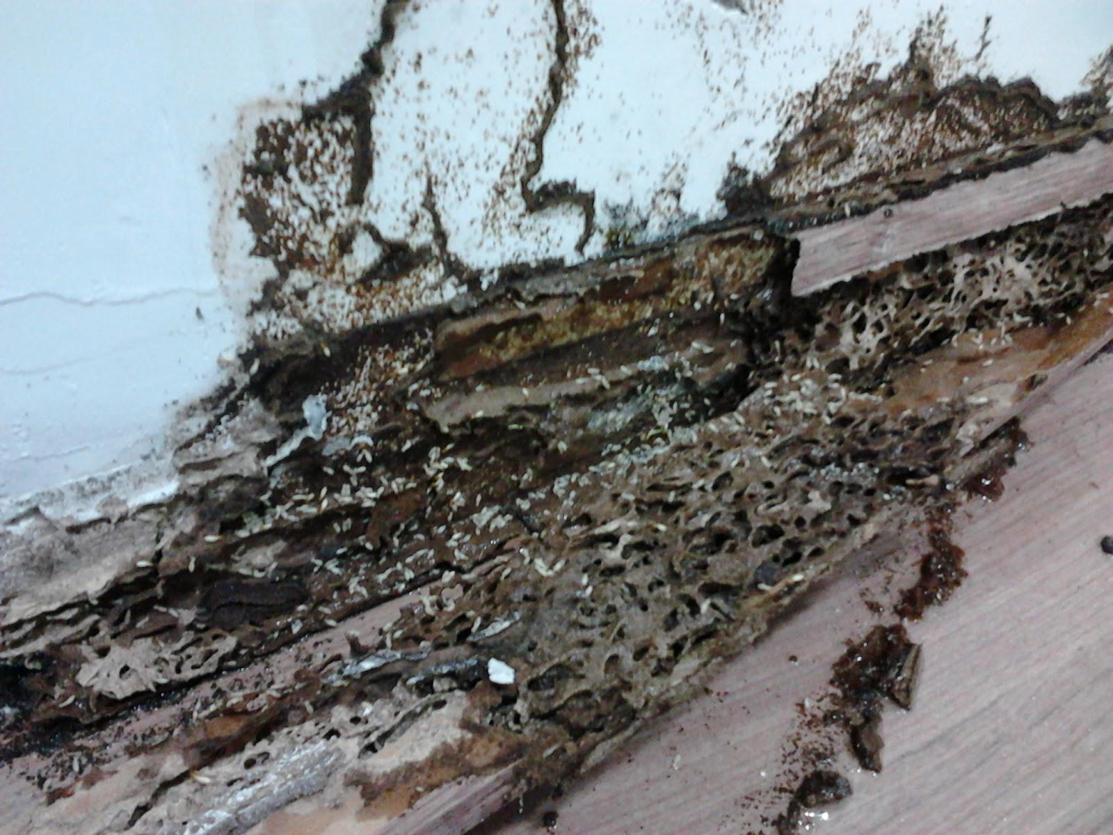 Art Wood Service RJ Marcenaria e Carpintaria: CUPIM COME MDF SIM #397392 1600x1200