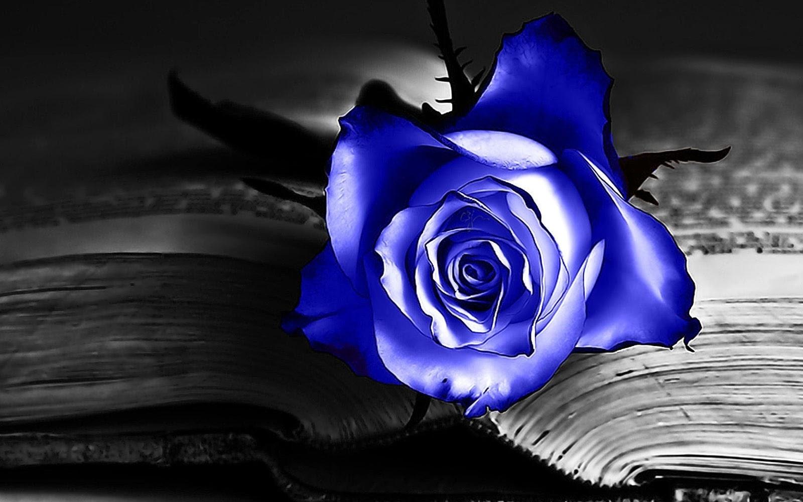 Blue Rose I Love You
